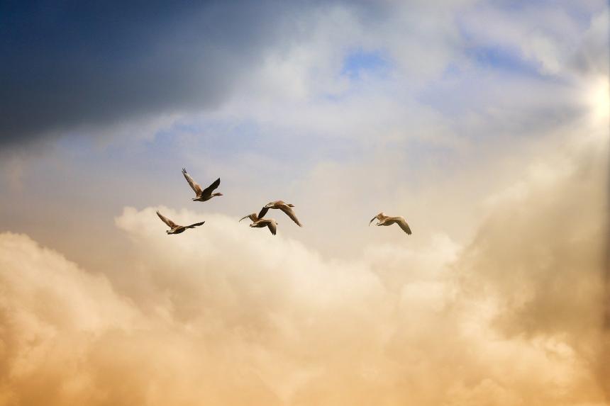 Fåglar som flyger mot himlens moln.
