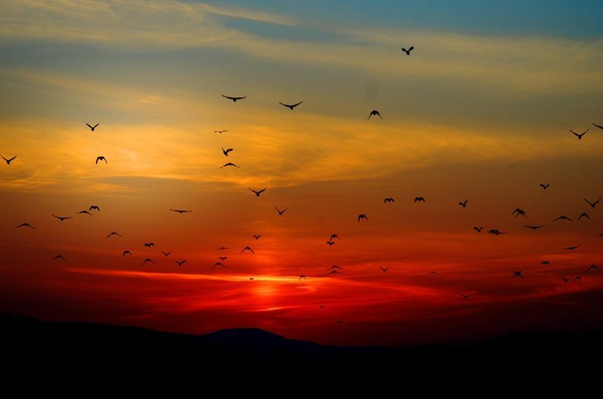 Fåglar och solnedgång.