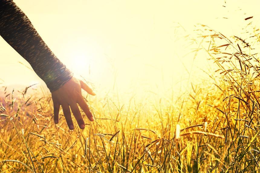 Hand, gräs och sol.