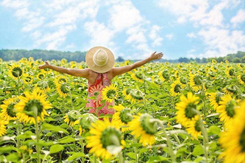 En kvinna bland solrosor.