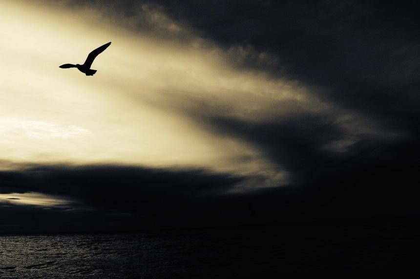 Fiskmås och svarta moln.